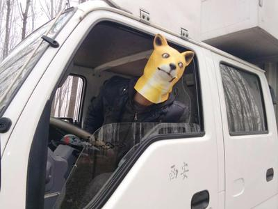 Маска желтой собаки мема